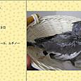 2013/6/4ブリーダーさん撮影