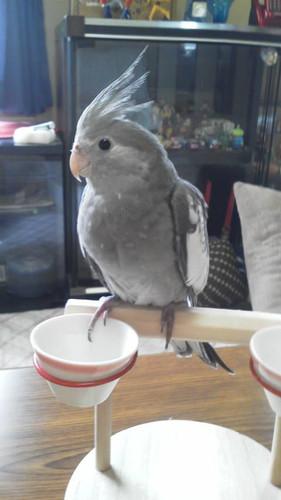 ある日の放鳥タイム